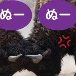 沖縄方言「ぬー」だけで喧嘩が成立する説について真面目に解説